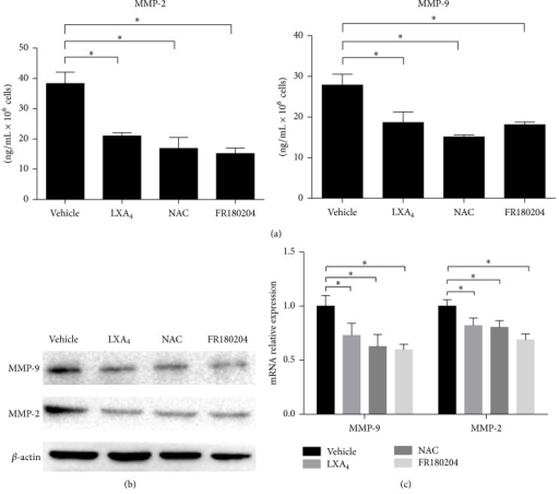 LXA4 downregulated MMP-9 and MMP-2 mRNA transcription. (a) Secretion of MMP-9 and MMP-2 influenced by LXA4, NAC, or FR180204. Cells were cultured with FBS-free medium for 24 hours and then MMP-9 and MMP-2 secreted into mediums normalized by cell number were tested by ELISA. (b) Western blot analysis of MMP-9 and MMP-2 in Panc-1 cells treated like above. (c) Transcription of MMP-9 and MMP-2 tested by RT-qPCR.  ∗P < 0.05 versus vehicle control.