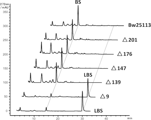 HPLC analysis of the reaction products for incubation of LBS with the CFEs of mutants of peptidase genes.Only the pepN (∆9) mutant lost all LBS hydrolytic activity while the other four mutants retained the same efficacy in LBS hydrolysis as the wild type.