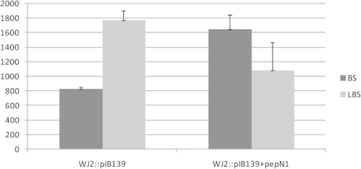 The yield of BS and LBS in S. lividans YGY7 (WJ2::pIB139), S. lividans YGY6 (WJ2::pIB139 + pepN1).The ratio of BS to LBS yield in the YGY6 is 3:2 as compared to that of 1:2 in YGY7, the yield of BS has nearly doubled.