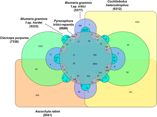 Comparison of orthologous genes between necrotrophic and biotrophic fungi.Venn diagram showing the distribution of unique and shared orthologous gene families between and among the three necrotrophic and three biotrophic ascomycete fungi based on gene family cluster analysis. The orthologous gene families among A. rabiei, C. heterostrophus, P. tritici-repentis, Blumeria graminis f.sp. tritici, Blumeria graminis f.sp. hordei and Claviceps purpurea were identified using OrthoMCL. Comparison revealed 1,458 genes are orthologous in the selected three necrotrophic fungi. Additionally, 112 orthologous genes are present among the selected three biotrophic fungi.