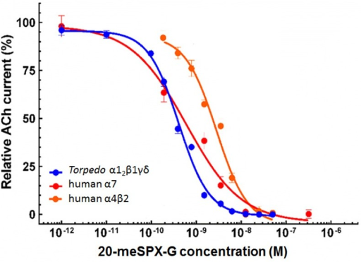 Concentration-dependent inhibition of ACh-elicited nicotinic currents by 20-meSPX-G in Torpedo α12β1γδ (blue curve); human α7 (red curve); and human α4β2 (orange curve) nAChRs incorporated or expressed in Xenopus oocytes. Peak amplitudes of ACh-evoked currents (mean ± SEM), were recorded under voltage-clamp conditions at −60 mV holding membrane potential, in the presence of 20-meSPX-G were normalized to control currents and fitted to the Hill equation. The concentration of ACh used for each nAChR subtype was the EC50 experimentally determined (see text for details).