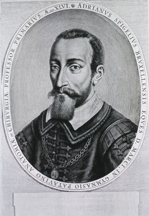 <p>Half length; left profile; chain around neck; square beard.</p>