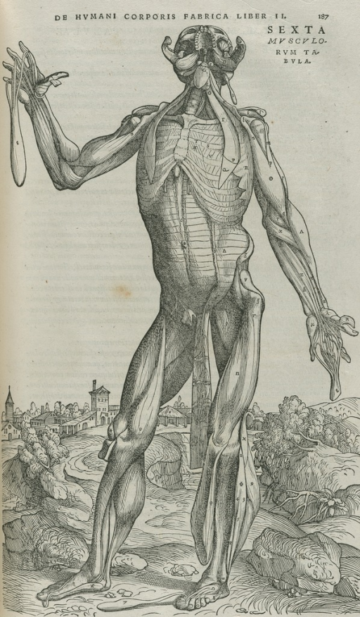 <p>Standing nude male in landscape. Skin is flayed, exposing insides, and head thrown back</p>