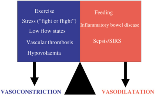 A dynamic balance between vasodilatation and vasoconstriction in the gastrointestinal blood supply exists during both health and disease.