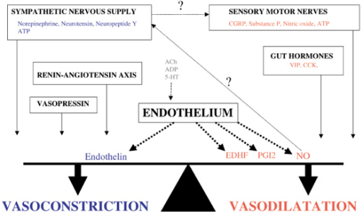 A complex interplay of neural, hormonal and endothelial-derived factors regulates the balance of gastrointestinal perfusion between vasodilatation and vasoconstriction. Question marks indicate possible interactions; dashed lines indicate endothelium-derived production. ACh, acetylcholine; CCK, cholecystokinin; CGRP, calcitonin gene-related peptide; EDHF, endothelium-derived hyperpolarizing factor; 5-HT, 5-hydroxytryptamine; PG, prostaglandin; VIP, vasoactive intestinal peptide.