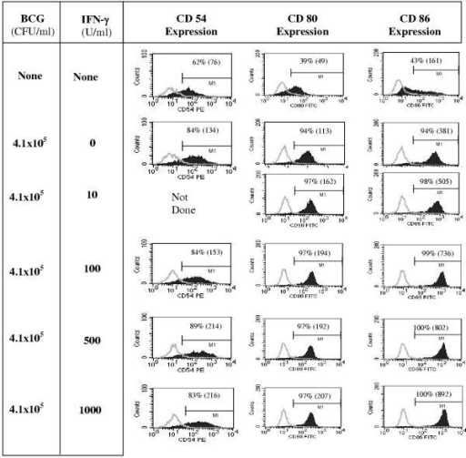 IFN-γ in combination with BCG stimulates enhanced DC surface expression of CD54, CD80, and CD86 DC, derived from 6-day monocyte cultures with GM-CSF and IL-4, were left untreated, matured with 4.1 × 105 CFU/ml of BCG alone, or in combination with various concentrations of IFN-γ for an additional 2 days in the presence of GM-CSF and IL-4. Cells were harvested and analyzed by flow cytometry for CD54, CD80, and CD86 expression. DC-gated (based on light scatter properties) data are shown (from a representative experiment out of three similar experiments). Isotype control staining is overlaid and shown by the light gray curve. Percent positive cells are shown in each panel and mean fluorescence intensity indicated within parentheses.