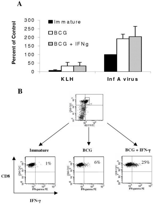 IFN-γ treatment in combination with BCG or BCG alone induces similar proportions of antigen-specific Vβ17+ T cells in recall responses, but which differ in IFN-γ producing ability DC were loaded with inactivated Influenza A virus or control protein (KLH) by pulsing with these proteins for 1 h followed by 2 hours of incubation before maturation with BCG (1.6 × 106 CFU/ml), BCG and IFN-γ (1000 U/ml), or left untreated (immature). After 20 hours of maturation, the DC were washed and autologous PBMC were added at a 10:1 (PBMC:DC) ratio in AIM-V media containing IL-2 and IL-15. Seven or eight days later the resulting cell lines were counted, analyzed for the percentage of Vβ17+CD8+ expression on T cells by flow cytometry, and the results calculated as a percent of the response seen using Influenza A-pulsed immature DC as the control (A). The influenza A virus-specific Vβ17+CD8+ T cells were re-stimulated for 40 h (including addition of GolgiPlug™ in the last 16 h) with immature or BCG ± IFN-γ matured DC loaded with Influenza M1 protein and evaluated for intracellular IFN-γ (B). Data in panel A are combined from three separate experiments and data in panel B are from one representative experiment out of four similar experiments.