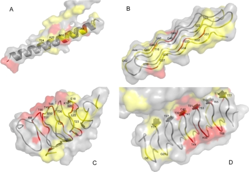 Examples of key residues mapped onto the surfaces of the seven representative AFPs used in the cross-validation tests.The structures were drawn using PyMOL [37]. Identification key residues are denoted in red (more votes) and yellow (fewer votes) for the following PDB structures: (A) the winter flounder α-helical AFP (PDB ID 1wfa) [35]; (B) the snow flea AFP (PDB ID 2pne) [38]; (C) the β-helical spruce budworm AFP (PDB ID 1eww) [13]; (D) the β-helical beetle Tenebrio molitor AFP (PDB ID 1ezg) [36].