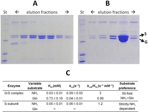 Biochemical characterization of T. thermophilus glutaminase and NAD synthetase subunits.SDS-page analysis of Ni-NTA affinity column (A) and gel filtration chromatography (B) elution fractions show that His-tagged recombinant T. thermophilus NADS and untagged GAT tend to co-purify. (C) Kinetic characterization of T. thermophilus S-subunit and G/S complex.