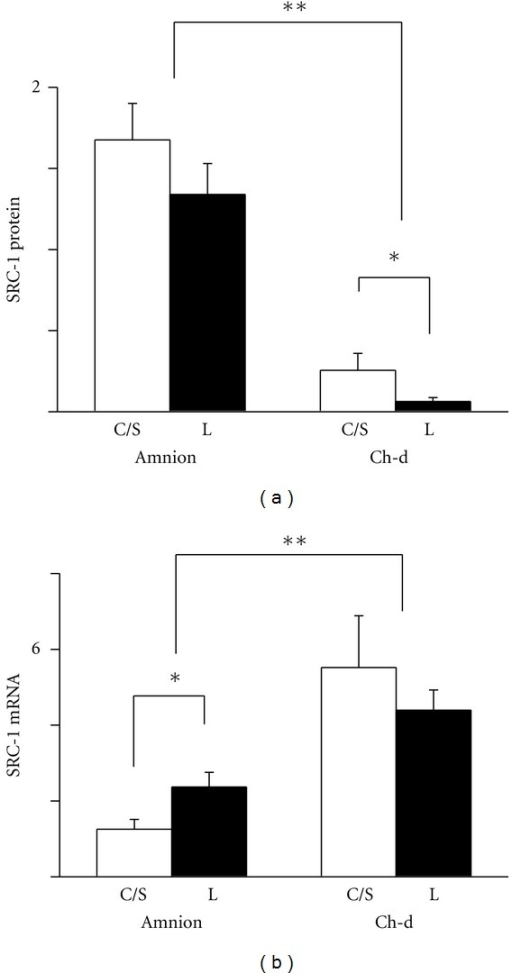 Expression of SRC-1 protein (a) and mRNA (b) in the amnion and chorion-decidua (Ch-d) from non-labor group (C/S) and labor group (L). Data were presented as the mean ± SEM. (a) **P < 0.05 between amnion and chorion-decidua. *P < 0.05 between C/S group and labor group within the chorion-decidua. (b) **P < 0.05 between amnion and chorion-decidua. *P < 0.05 between C/S group and labor group within the amnion. Ponceau S staining was used as the internal control for Westerns and GAPDH mRNA as the internal control for mRNA.