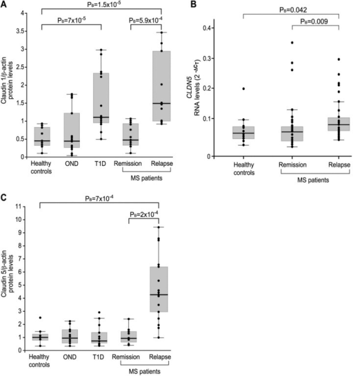 Expression levels of claudins 1 and 5 in leukocytes from MS and T1D. (A) Claudin 1 protein levels in PBLs of healthy controls (n = 13), OND controls (n = 14), T1D controls (n = 14), MS patients in remission (n = 13) and MS patients in relapse (n = 10). (B) The expression levels of CLDN5 RNA (2ΔCT) relative to reference genes were determined by real- time RT-PCR of PBL RNA derived from MS patients in relapse (n = 33), MS patients in remission (n = 39), and healthy controls (n = 18). (C) Claudin 5 protein levels in the PBLs of healthy controls (n = 13), OND controls (n = 14), T1D controls (n = 14), MS patients in remission (n = 11), and MS patients in relapse (n = 17). Box plot and data points display the relative protein levels determined by Western blot analysis. The relative intensity of claudin 1 or claudin 5 proteins compared to β-actin signals was determined by densitometry. Medians are depicted by horizontal bars.