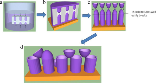 Schematic illustrations on the formation of PCDTBT nanotubes. Formation of PCDTBT nanotubes due to (a) Capillary and gravitational force of PCDTBT solution inside nanopores and (b) wetting and complete filling of the nanopores. (c) Formation of convex meniscuses and (d) PCDTBT nanotubes of broken meniscuses.