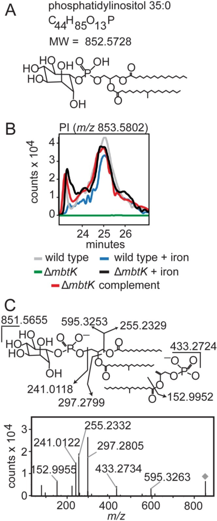 mbtK deletion depletes phosphatidylinositol during iron starvation.(A) Phosphatidylinositol C35:0, neutral mass 852.5728, was detected in the positive mode (B) as [M+H]+ (m/z 853.5802) from triplicate total lipid extracts that were normalized for mass. Chromatogram is representative of triplicate runs. (C) Collision of phosphatidylinositol C35:0 in the negative mode as the [M-H]- ion, m/z 851.5655, showed the expected fragments confirming its structure.