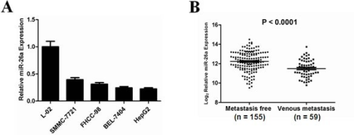 Down-regulation of miR-26a expression in human HCC, especially in metastatic HCC tumors(A) Relative expression levels of miR-26a (mean ± s.d. of three independent experiments) assessed by qRT-PCR in normal hepatocyte-derived cell line (L-02) and various HCC cell lines. (B) Comparison of the expression levels of miR-26a between metastasis-free and metastatic HCC. Expression levels of total miR-26a as the average expression levels of pre-miR-26a-1 and pre-miR-26a-2 from a normalized GEO dataset (GSE6857). Vertical axes represent log (base 2) relative quantification values. P value indicates statistical significance analyzed by Student's t test.