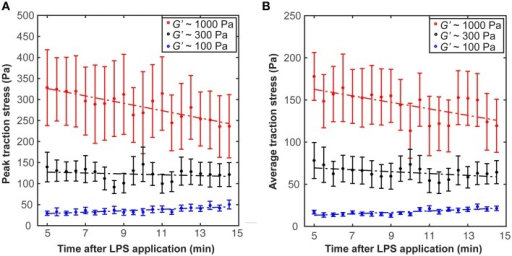 Microglia activation through LPS changes traction stresses. After 5 min incubation in LPS, (A) peak traction stresses and (B) average traction stresses decreased on stiffer substrates (G′ ~ 300 or 1000 Pa) but slightly increased on soft gels of G′ ~ 100 Pa (shown is the mean ± SEM).
