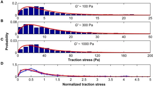 Traction stresses are distributed according to a Burr distribution. Stress distributions for microglia growing on substrates of G′ ~100, ~300, and ~1000 Pa are shown in (A–C), respectively. Red curves represent the best three-parameter Burr distribution fits. (D) The stress distributions were normalized by their standard deviation. Blue curves show the normalized stress distributions for G′ ~100, ~300, and ~1000 Pa, which were statistically similar (p > 0.25, Kruskal-Wallis ANOVA). The red curve shows the Burr distribution fit for all data combined.