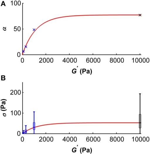 Dependency of the scale parameter α (A) and the traction stress σ (B) on the gel's shear modulus G′. (A) Blue crosses represent α values determined for G′ ~100, ~300, and ~1000 Pa, the black cross represents an α value approximated for G′ ~ 10 kPa using the master curve and the constant peak stress to standard deviation ratio. An initial regime of fast increase of α (which scales proportionally with the median traction stress) was observed for shear moduli below ~2 kPa. The red curve represents the best fit with an adjusted R2-value of 0.99. (B) Boxplots of the traction stresses σ for G′ ~100, ~300, and ~1000 Pa are shown in blue. Black boxplot shows the estimated traction stress σ for G′ ~10 kPa. An initial regime of fast increase of σ was observed for shear moduli below ~2 kPa. The red curve represents the best fit through the median traction stresses with an adjusted R2 value of 0.99.