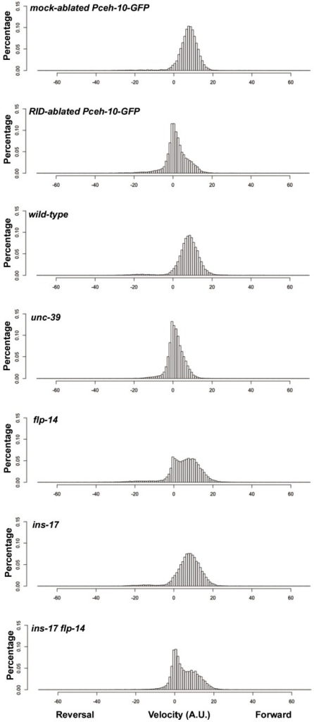 Frequency distribution of forward and reversal velocities quantified in Figure 5.Percentage distribution of forward and reversal velocities of individual animals of the following genotypes: hpIs202 (Pceh-10-GFP RID marker) mock-ablated, hpIs202 (Pceh-10-GFP RID marker) RID-ablated, wild-type (N2), unc-39, flp-14, ins-17, and ins-17 flp-14. Negative values represent reversal velocity; positive values represent forward velocity; zero value represents pauses. Compared to their respective controls, RID-ablated and unc-39 mutants exhibited reduced velocities, specifically during forward locomotion. flp-14 and ins-17 flp-14 mutants showed a tendency towards reduced velocities, while ins-17 mutants were similar to wild-type (N2). N = 10 animals/genotype.DOI:http://dx.doi.org/10.7554/eLife.19887.012