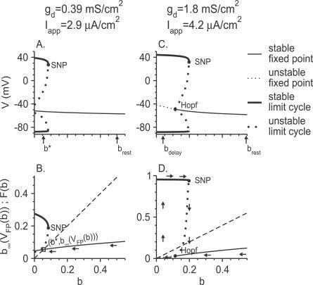 Fast–Slow Analysis of Neurons with Small Na+ Window Current Exhibiting a Depolarized Rest Potential or StutteringFast–slow analysis is described for θm = −24 mV.(A,B) Parameters are: gd = 0.39 mS/cm2, Iapp = 2.9 μA/cm2. (Except for Iapp, parameters are as in Figures 5A–5C and 2C. The neuron is quiescent at steady state.)(C,D) The parameters gd = 1.8 mS/cm2 and Iapp = 4.2 μA/cm2 are as in Figure 2D, and the neuron stutters at steady state. For each case, we plot the bifurcation diagrams of the fast subsystem in the V-b space (A,C), and the functions b∞(VFP(b)) for fixed points and F(b) for limit cycles (Equation 2) as functions of b (B,D). Symbols are as in Figure 5.
