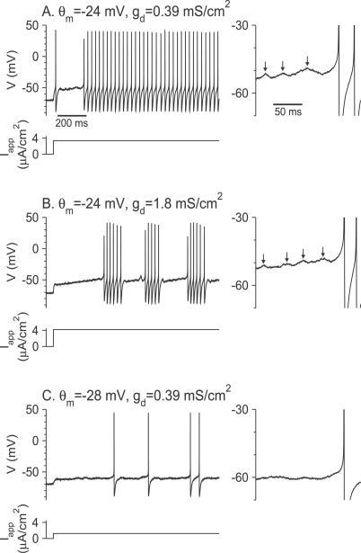 Voltage Traces and Firing Patterns of the Model Neuron in Response to a Noisy Current Step(A) Delayed tonic firing for θm = −24 mV, gd = 0.39 mS/cm2, Iapp = 3.35 μA/cm2.(B) Delayed stuttering for θm = −24 mV, gd = 1.8 mS/cm2, Iapp = 4.2 μA/cm2.(C) Delayed tonic firing for θm = −28 mV, gd = 0.39 mS/cm2, Iapp = 1.25 μA/cm2. In all three panels, the variance of the noise is D = 0.01 μA2 × ms/cm4. The time course of the mean applied current, Iapp, is also plotted. The membrane potentials during the delay periods are magnified in the panels on the right. Note the presence of subthreshold oscillations in (A) and (B). The peaks of these oscillations are denoted by the arrows.