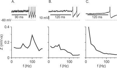 Experimental Results: Fourier Spectrum of the Membrane Potential Fluctuations during Delay Periods in FS NeuronsTop: voltage time courses for three FS neurons exhibiting delayed firing.Bottom: the Fourier spectra of the subthreshold membrane potentials during the delay before spiking for these three neurons.(A) The minimal (just suprathreshold) firing frequency of this neuron is high (80 Hz). Pronounced subthreshold oscillations are observed during the delay period.(B) The minimal firing frequency of this neuron is lower than in (A) (38 Hz). The subthreshold oscillations exhibited by this neuron are less pronounced than in (A).(C) The minimal firing frequency of this neuron (4.3 Hz) is much lower than in (A) or (B). This neuron does not exhibit subthreshold oscillations during the delay period. Spectra were calculated over the time intervals denoted by the horizontal bars in the top panels.
