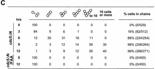 Time-dependent induction of connected cells by overexpression of cdc5ΔN. (A) Strain KLY1083 expressing three copies of GAL1-EGFP-cdc5ΔN homogeneously induced a chained cell phenotype. Typical cell morphologies (DIC images) were shown after culturing these cells under the induction conditions for 7 h (left), 12 h (middle), or 24 h (right). These cells continue to increase cell body numbers without an apparent cell division. Bar: 5 μm. (B) Strain KLY1229 expressing three copies of the corresponding FAA triple mutant failed to induce this phenotype even after 24 h induction. Bar: 5 μm. (C) Quantification of connected cells as a function of time. Percentage of cells in chains was determined by dividing the sum of cells in chains by the total number of cells. cdc5ΔN, strain KLY1083; cdc5ΔN/FAA, strain KLY1229. (D) Strain KLY1083 grows without increasing cell numbers under the induction conditions. Cells expressing control EGFP (KLY1080), EGFP-cdc5ΔN (KLY1083), or EGFP-cdc5ΔN/FAA (KLY1229) were taken at the indicated time points upon transferring cultures into YEP-galactose. Cell number was determined by plating serial dilutions on YEP-glucose and counting the colony numbers. The number of cells at time 0 was 1.2 × 106 cells/ml with an OD600 of 0.05. The resulting cell number and OD600 at each time point were divided by those at time 0 to give relative cell number and OD600. (E) The FAA mutations do not influence the stability of EGFP-cdc5ΔN. EGFP-cdc5ΔN was detected by an anti–GFP antibody, whereas Cdc28 (loading control) was recognized by an anti–Cdc28 antibody. 1X, one copy of cdc5ΔN; 3X, three copies of cdc5ΔN.