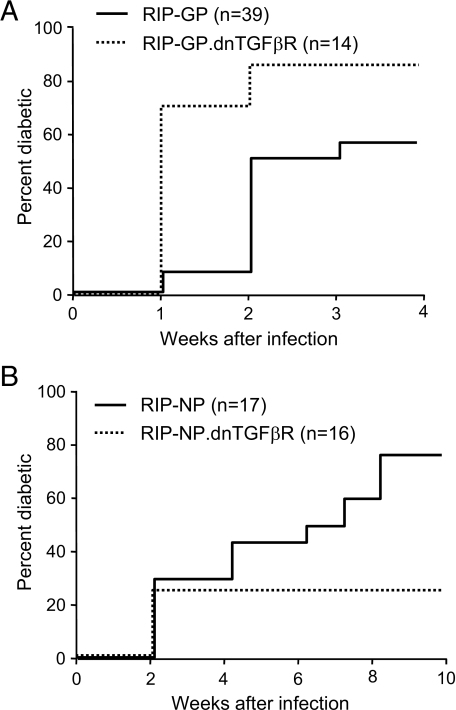 Absence of TGF-β receptor signaling in T-cells has opposite effects on virally induced autoimmune diabetes depending on the effector mechanism. dnTGFβR mice were crossed onto fast-onset diabetes RIP-GP or slow-onset diabetes RIP-NP lines. Groups of RIP-GP.dnTGFβR (A) mice, RIP-NP.dnTGFβR (B) mice, and their single transgenic RIP-GP or RIP-NP littermates were infected with LCMV, and diabetes incidence was monitored by measuring blood glucose. Mice were considered diabetic when blood glucose exceeded 300 mg/dl.