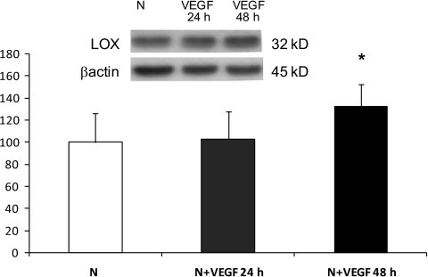 Western blot analysis of LOX protein levels in RRECs grown in normal (N) medium and stimulated with VEGF for 24 or 48 h. Graph shows LOX protein level was not significantly changed in cells stimulated with 25 ng/ml of VEGF for 24 h, although after 48 h of VEGF stimulation, LOX expression was significantly increased compared with cells grown in normal medium. Data are presented as mean ± SD (*P < 0.05; n = 4).