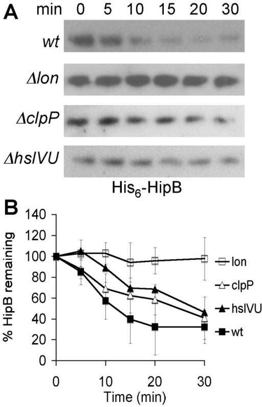 HipB proteolysis in E. coli wild type and protease deficient strains.HipB was expressed from pBRhipB in BW25113 (KLE901) and its lon::kan (KLE902), clpP::kan (KLE903) or hslVU::FRT (KLE904) derivate. The strains were grown in LB medium, and at an OD600 of 0.3 1 mM IPTG was added. After 1 h induction, protein synthesis was inhibited by the addition of 100 µg/ml Cam, and samples for Western blots were removed over the course of 30 min. (A) The presence of HipB in whole cell lysates was detected with an anti-his antibody. (B) The rate of degradation was calculated from at least 3 independent experiments. Closed squares, KLE901 (wild type); open squares, KLE902 (Δlon); closed triangles KLE904 (ΔhslVU); open triangles, KLE903 (ΔclpP).