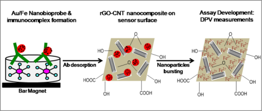 Schematic illustration of the two nanohybrid systems i.e. Au/Fe nanobioprobes on the microtitre plate and the subsequent metal ion sensing on rGO/CNT nanostructured electrodes.