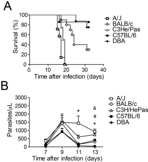 Inbred mouse strains vary in their susceptibility to infection by the Y strain of T. cruzi.Male mice were infected i.p. with 1000 trypomastigotes when eight weeks old and included A/J (n = 8), BALB/c (n = 10), C3H/HePas (n = 8), C57BL/6 (n = 7) and DBA (n = 8) strains. (A) Mortality was evaluated by daily inspection of the cages and differed (P<0.05) between BALB/c and C57BL/6, BALB/c and DBA, BALB/c and A/J, BALB/c and C3H/HePas, C57BL/6 and A/J, C57BL/6 and C3H/HePas, DBA and A/J, and DBA and C3H/HePas. Data are representative of those found in three independent experiments. (B) Parasitemia was quantified microscopically by counting the parasites in 5 μl of citrated blood obtained from the tail lateral vein at days 7, 9, 11 and 13 days postinfection. At day 11, (*) indicates P<0.05 between A/J and all other groups. At day 13, (*) indicates P<0.05 between A/J and BALB/c, A/J and C57BL/6, and A/J and DBA; (#) indicates P<0.05 between C3H/HePas and BALB/c, C3H/HePas and C57BL/6, and C3H/HePas and DBA; and (&) indicates P<0.05 between DBA and C57BL/6. Data are representative of those found in three independent experiments.