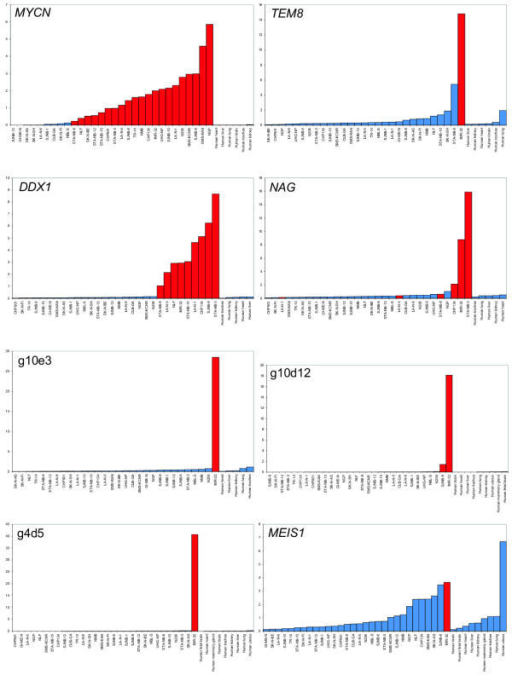 Relative expression levels obtained by real-time quantitative RT-PCR: Relative mRNA expression levels obtained by quantitative PCR in 30 neuroblastoma cell lines and 9 normal human tissue samples (samples with gene amplification are marked in red) (relative scale, rescaled to an average expression level of 1).