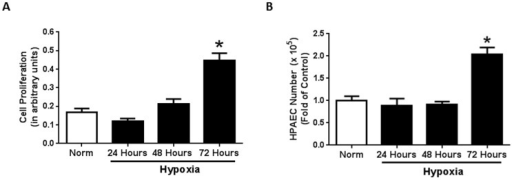 Prolonged hypoxia exposure increases endothelial cell proliferation.Seventy two hours of hypoxia exposure significantly stimulates endothelial cell proliferation when compared to all other groups. Human pulmonary artery endothelial cells (HPAEC) were exposed to normoxic or hypoxic (1% O2) conditions for 24-, 48-, or 72 hours (n = 4). Following exposure, cell proliferation was assessed by MTT (Figure 1A) assay and Trypan Blue Dye Exclusion Assay (Figure 1B). * p<0.0001.