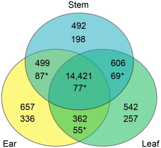 "Overlap of genes assessed in the three tissues overall and in the CCT-AB gene list.Each compartment of the Venn diagram contains the tissue combination on top, number of genes overall in the middle, and number of genes from the CCT-AB gene list on bottom. CCT-AB overlap numbers marked by an ""*"" indicate significantly more overlap than expected by chance (permutation tests, p<1e-5). In the overall analysis the vast majority of genes (82%) were assayed in all three tissues. While this percent is much smaller for the CCT-AB candidate gene list (∼7%), this is still more of an overlap than expected by chance. The much higher degree of overlap of CCT-AB genes than expected suggests some CREs act in multiple tissues. Additionally, there are also many single tissue CCT-AB genes, which points towards the many cis elements that appear to function in tissue specific patterns."