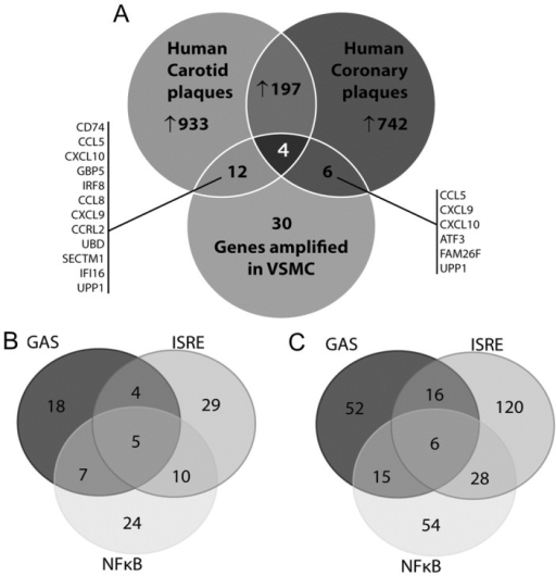 Expression of synergistically amplified genes in atherosclerotic vessels.A, Venn diagram with analysis of microarray datasets obtained from human coronary plaques and human carotid plaques. B, Promoter analysis of the differentially expressed genes in carotid (left panel) and coronary plaques (right panel). For details see text.