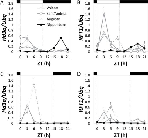 Diurnal patterns of Hd3a and RFT1 mRNA expression in Italian varieties under SD and LD. (A) Diurnal quantification of Hd3a mRNA expression under SD. (B) Diurnal quantification of RFT1 mRNA expression under SD. (C) Diurnal quantification of Hd3a mRNA expression under LD. (D) Diurnal quantification of RFT1 mRNA expression under LD. Quantification of expression levels was determined in Volano, Sant'Andrea and Augusto compared to Nipponbare. Bars on top indicate day (white) or night (black). ZT indicates hours from dawn (Zeitgeber). Ubiquitin (Ubq) was used to normalize gene expression levels.