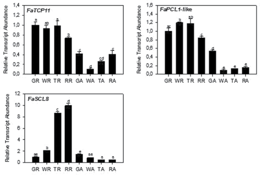 Expression patterns of FaTCP11, FaPCL1-like and FaSCL8 during fruit development. GR, green stage receptacle; WR, white stage receptacle; TR, turning stage receptacle; RR, red stage receptacle; GA, green stage achenes; WA, white stage achenes; TA, turning stage achenes; RA, red stage achenes. Significance was measured by a one-way ANOVA with P<0.001.