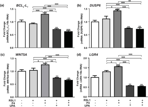 Hormonal regulation of P4-PRA-upregulated genes.(a) BCL2-L1, (b) DUSP6, (c) WNT5A, (d) LGR4 mRNA expression levels were determined in MDA-iPRA cells. Cells were treated for 6 h with vehicle, P4 (1 nM) and/or UPA (1 μM) in steroid-free medium, following 24 h induction of PRA expression using RSL1 (0.5 μM). RT-qPCR analyses were performed as described in Materials and Methods. Data are expressed as fold induction compared to vehicle condition arbitrarily set at 1, and are means ± SEM from three independent cell cultures measured in duplicate. *, **, *** symbols indicate p< 0.05, 0.01 and 0.001 respectively compared to the vehicle-treated MDA-iPR- cells while x, xx, xxx symbols indicate p<0.05, 0.01 and 0.001 respectively compared to the V or P4-treated MDA-iPRA cells (non-parametric Mann Whitney t-tests).