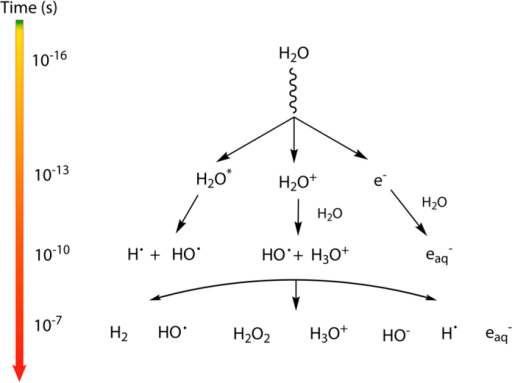 Time scale of events in water radiolysis leading to the primary products: H2; HO•; H2O2; H3O+; HO−; H• and eaq−.