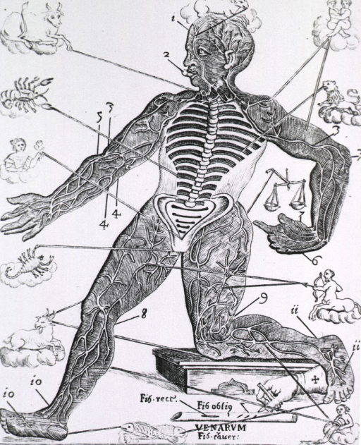 <p>Human figure with the spine and ribs exposed, and showing veins and arteries in the extremities of the body; astrological signs are linked to the body parts they were thought to influence. Also shown is a vein with incisions for bloodletting.</p>