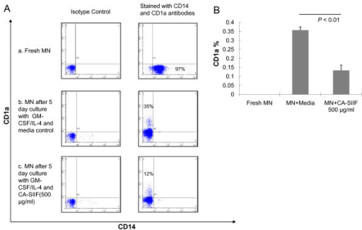 CA-SIIF dramatically reduces CD1a expression on human monocyte-derived dendritic cells. (A) Impact of CA-SIIF on GM-CSF/IL-4 induced monocyte-derived dendritic cells. (a) CD14 expression on fresh monocytes, (b) CD1a expression on monocytes after 5 day culture with GM-CSF/IL-4 in absence of CA-SIIF, (c) CD1a expression on monocytes after 5 day culture with GM-CSF/IL-4 in presence of CA-SIIF. Flow histograms are representative of 3 independent experiments. (B) Cumulative dramatic reduction of CD1a expression on human monocytes-derived dendritic cells cultured with CA-SIIF. Cell density: 5 × 105/ml. n = 3.