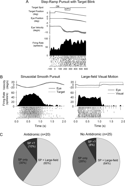 SP and visual sensitivity of FEF neurons. (A) Example of FEF neuron tested during step-ramp pursuit with target blink. Response continues during the blink, indicating extraretinal sensitivity. (B) Representative neuronal response of FEF neuron during sinusoidal SP tracking at 0.5 Hz ± 10° and visual stimulation with a large-field, constant speed random dot pattern (0.5 Hz ± 10°). This SP-related neuron also showed a visual response at short latency (∼65 ms) following the start of leftward visual motion. (C) Proportional distributions of large-field visual and SP responses in activated and nonactivated FEF neurons. Isolation was lost on some SP neurons before visual testing during fixation (SP+?).