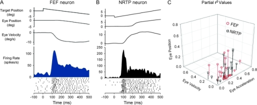 Comparison of neuronal response dynamics for representative FEF (conventions as in Figure 3) and rNRTP (Ono et al. 2005) SP neurons during step-ramp tracking. Response of antidromically activated FEF SP neuron (A) and rNRTP SP neuron (B). Both neurons show a strong transient responses during SP initiation. (C) Partial r2values for SP neurons in the rNRTP (Ono et al. 2005) and in FEF (antidromically activated from rNRTP). Both populations show considerable overlap with a trend toward most sensitivity to eye acceleration.