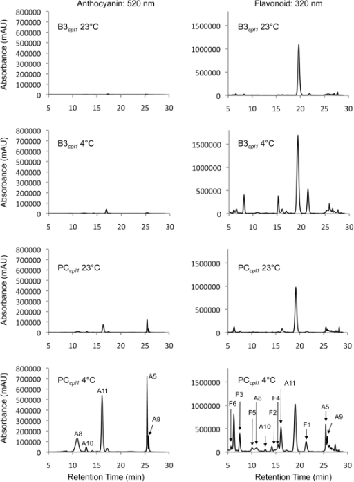 "HPLC/PDA chromatograms showing the flavonoid profiles of PCcpl1 and B3cpl1 plants under normal growth condition (23°C) or after additional 3 weeks of cold treatment (4°C).""A"" stands for cyanidin derivatives, and ""F"" stands for flavonoids, which were identified by LC-MS. The peaks were labeled according to Tohge et al (2005)."