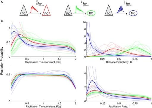 Inference of short-term plasticity parameters from experimental data from visual cortex. (A) Sample experimental STP traces are shown for PC–PC (red), PC–BC (green), and for PC–MC (blue) connections. (B) Marginalized posterior distributions obtained using slice sampling from these three different excitatory connections suggest that PC–MC (n = 9) connections are quite different from PC–PC (n = 9) and PC–BC (n = 12) connections. Light colored lines show individual connections, while dark colored lines correspond to their average.