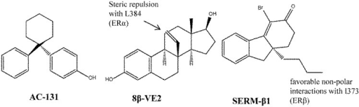 The non-steroidal AC-131 was used as the template in a SAR study to produce analogues such as compound 13 that showed ERβ selectivity. The feature that led to the ERβ selectivity for 8β-VE was repulsion from unfavorable interaction with M336 in ERβ, and for SERM-β1 was favorable hydrophobic contact with I373 in ERβ).