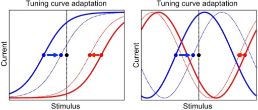 The adaptation mechanism, by which tuning curves of neurons are modified according to the presented stimulus. Tuning curves of two neurons are shown, one neuron in blue and the other one in red, before and after adaptation (full and dashed line, respectively). The presented stimulus is indicated by the black dot and the vertical black line. The tuning offsets of the two neurons are shown by the blue and red dots. Tuning offsets are attracted by the stimulus, as shown by the arrows. Left: sigmoidal tuning curves. Right: periodic tuning curves.