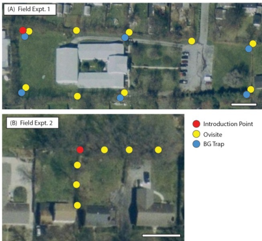 Field sites for male introduction experiments in Lexington, Kentucky.(A) Field Experiment 1 Site consisted of a single point introduction site (red circle), six BG trap sites (blue circle) and nine ovisites (yellow circles). (B) Field Experiment 2 Site consisted of a single point introduction site and six ovisites. Images are from http://datagateway.nrcs.usda.gov/GDGHome.aspx. Bars = 60ft.