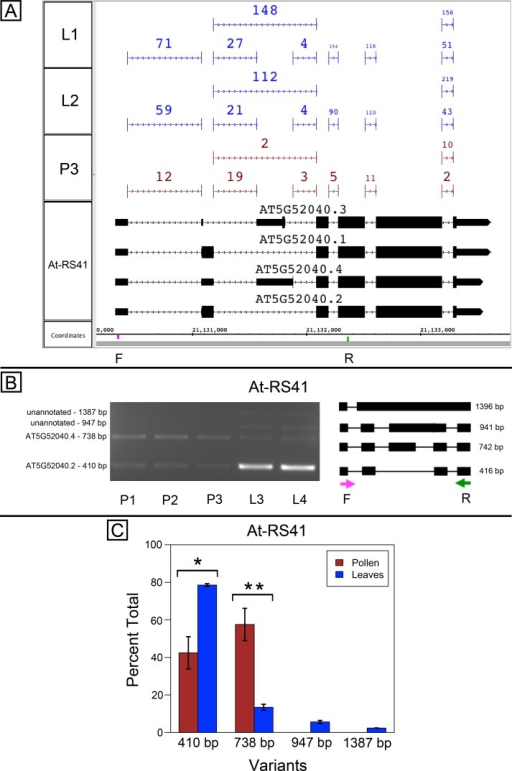 Pollen-specific splicing in At-RS41.(A) Junction features from RNA-Seq reads for leaf (L1, L2) and pollen (P3) samples alongside annotated gene models. Numbers indicate how many spliced reads supported the indicated junction in pollen and leaf RNA-Seq libraries. Primers used in semi-quantitative PCR are shown. Primer sequences were GAGAGCCTCGAAGAAAGCAA (F) and TGCATCGAAGTTGATCACAA (R). (B) Gel electrophoresis of PCR amplification of pollen (P1, P2, P3) and leaf (L3, L4) cDNAs and corresponding model of alternative splice variants. Estimated fragment size from gel and theoretical fragment size based on splice model found to left and right, respectively, in base pairs (bp). (C) Percent total of each observed splice variant in pollen and leaf samples quantified from gel electrophoresis in (B). Values are averages of replicate samples. Error bars indicate two standard deviations. Asterisk indicates p-value less than 0.05, double asterisk less than 0.01.