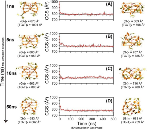 Monitoring of ΩCALC of [(dTGGGGT)4 + 3 NH4]5- for four gas phase 500 ns MD replicas started from different time points of the solution molecular dynamics (MD): after (A) 1 ns, (B) 5 ns, (C) 10 ns, and (D) 50 ns of MD in solution. Red and grey line are to ΩCALC obtained by using EHSSrot-Siu and mobcal-He25, respectively. The black horizontal line indicates the average experimental value. The starting structures taken from the solution MD and the final structures of the MD simulations in gas phase are shown on the left and on the right, respectively. Furthermore, the ΩCALC of the starting structures and the final structures of the MD simulations in gas phase are indicated below each structure. (G4)4 refers to the ΩCALC calculated for the sole G-core (in orange on the molecular models), while (TG4T)4 refers to the ΩCALC calculated for the whole structure.